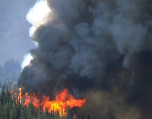 Do wind turbines lead to more forest fires?
