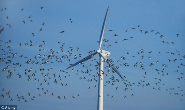 RSPB makes a killing… from windfarm giants behind turbines accused of destroying rare birds